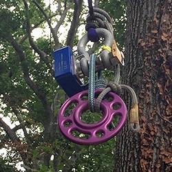 Tree Climbing 1